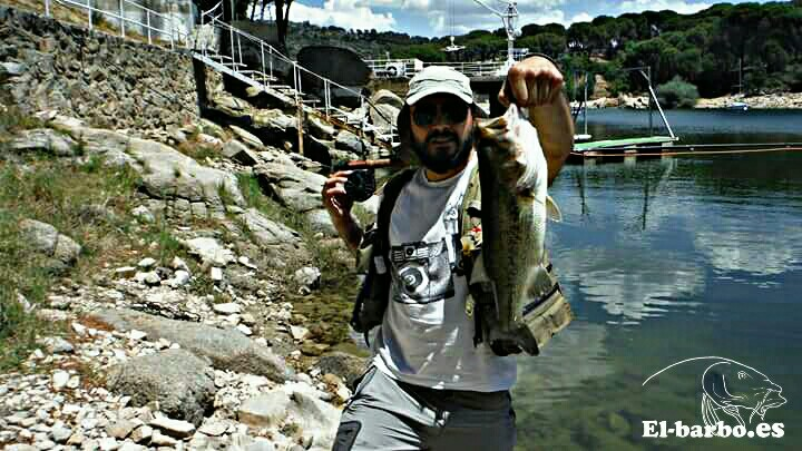 black bass con zonker